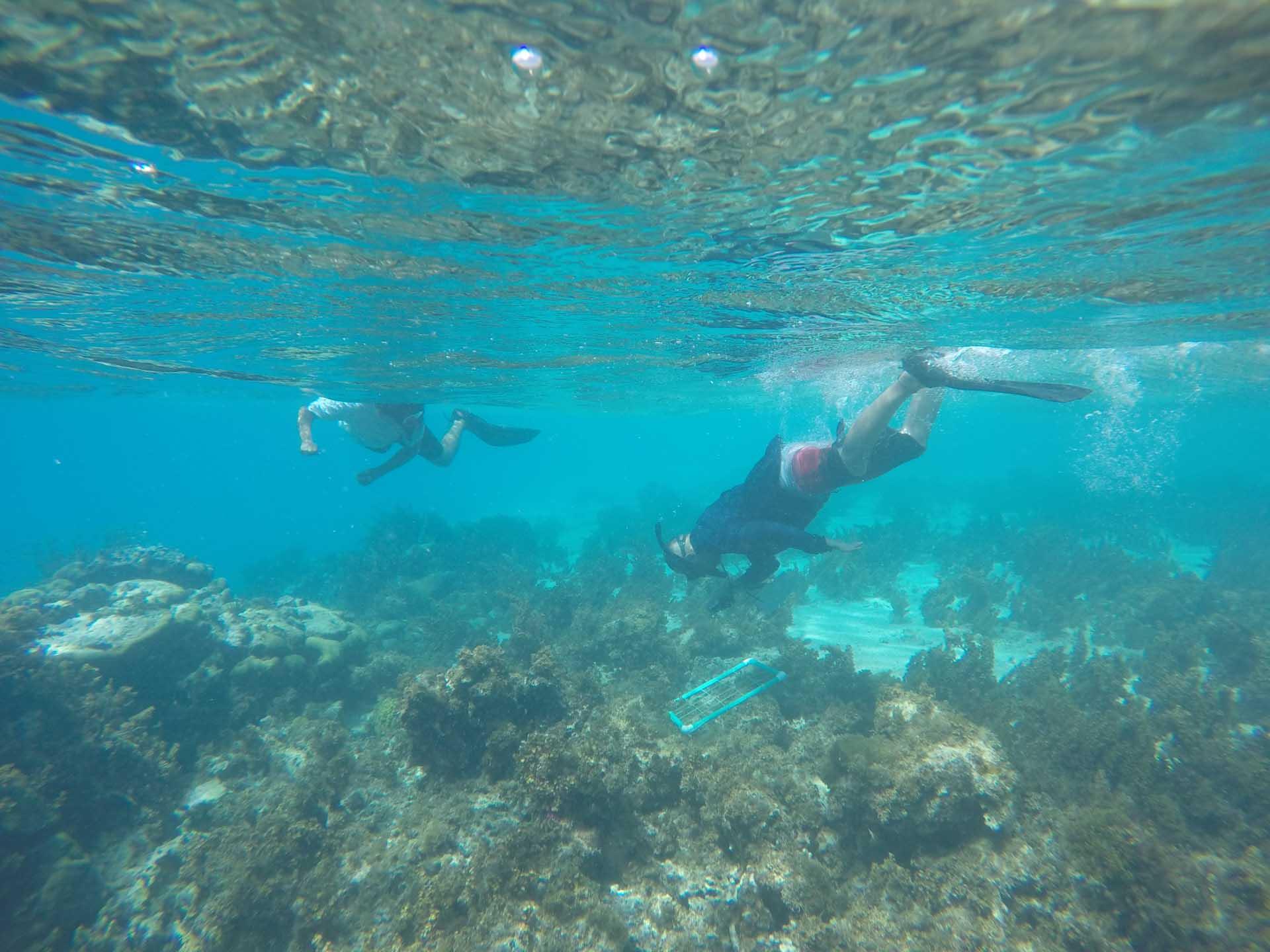 Snorkeling en San Andrés y Proviencia